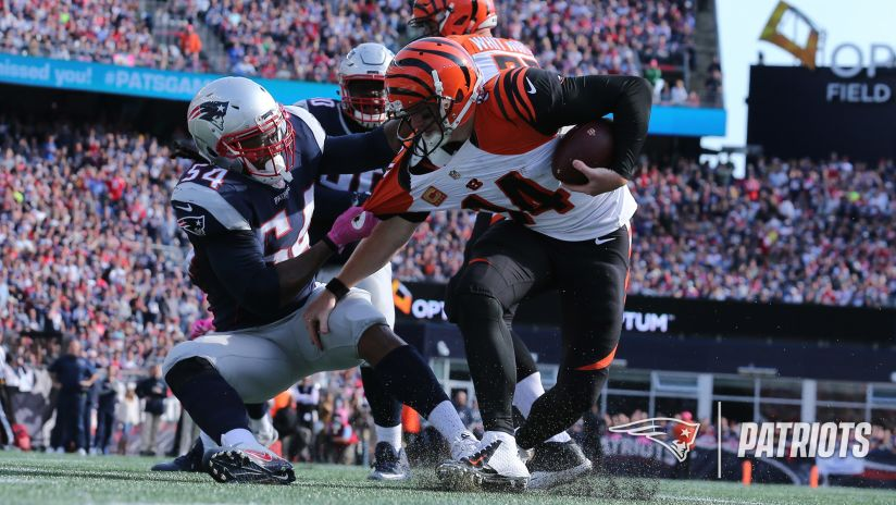 Patriots LB Dont'a Hightower (54) sacks Cincinnati Bengals QB Andy Dalton (14) during New England's 35-17 win at Gillette Stadium on Oct. 16, 2016.